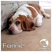 Adopt A Pet :: Fannie - Novi, MI