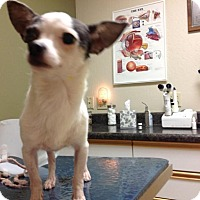 Adopt A Pet :: Nacho (aka Pepe) - Phoenix, AZ