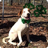 Adopt A Pet :: Petey Too - Tullahoma, TN