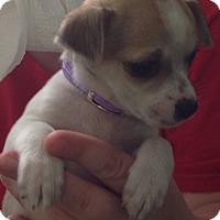 Adopt A Pet :: Bell - Meridian, ID