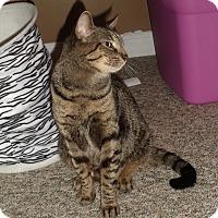 Adopt A Pet :: Spice - Douglas, ON