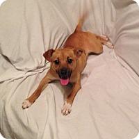 Adopt A Pet :: Molly B - Homewood, AL
