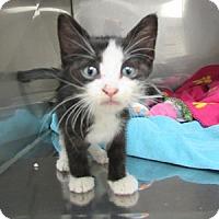 Adopt A Pet :: Abbie - Athens, GA