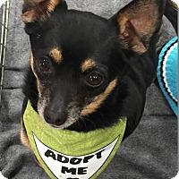 Adopt A Pet :: Rocky - Surrey, BC
