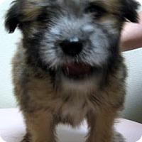 Adopt A Pet :: Bret - Gary, IN