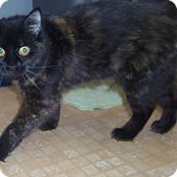 Adopt A Pet :: SYLVIE - Medford, WI
