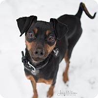 Adopt A Pet :: Jett - Drumbo, ON