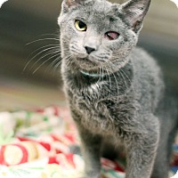Adopt A Pet :: Santana - Appleton, WI