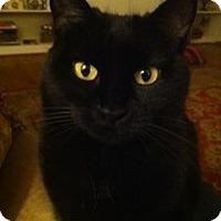 Adopt A Pet :: Bridgette - Columbia, SC