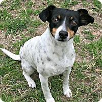 Adopt A Pet :: Adele - Lufkin, TX