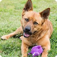 Adopt A Pet :: Max - Patterson, CA