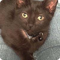 Adopt A Pet :: Dandy - Merrifield, VA