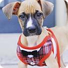 Adopt A Pet :: Fido