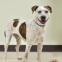 Adopt A Pet :: Molly - Mt. Vernon, IN