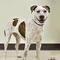 Adopt A Pet :: Molly - Mt. Vernon, IN