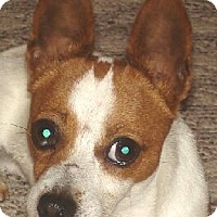 Adopt A Pet :: Trooper - P - Lafayette, LA