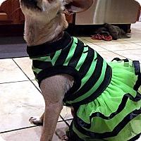Adopt A Pet :: JoJo - Tijeras, NM