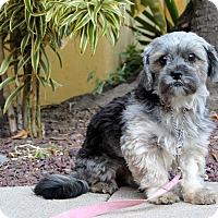 Adopt A Pet :: Pirate - Los Angeles, CA