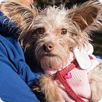 Adopt A Pet :: Ingrid Bolso Berdal - Jersey City, NJ
