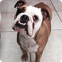 Adopt A Pet :: Georgia - Odessa, FL