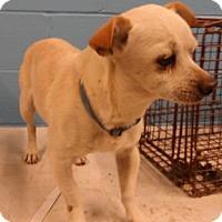 Adopt A Pet :: 66422 - Nogales, AZ
