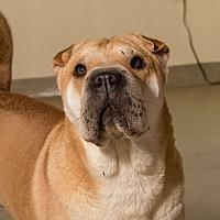 Adopt A Pet :: Thelma - Myakka City, FL