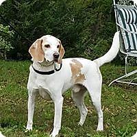 Adopt A Pet :: Doc - Atchison, KS