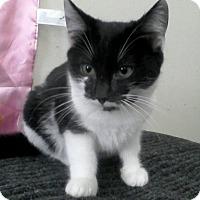 Adopt A Pet :: Simmons - Trevose, PA