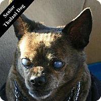 Adopt A Pet :: Teller T. - Cupertino, CA