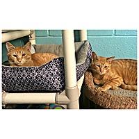Adopt A Pet :: Phoenix & Brimstone - Forked River, NJ