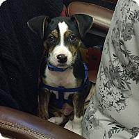 Adopt A Pet :: Donner - Tampa, FL