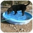 Photo 2 - Labrador Retriever Mix Dog for adoption in Thatcher, Arizona - Nellie