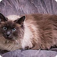 Adopt A Pet :: MINX - Anna, IL