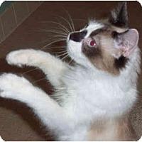 Adopt A Pet :: Ellee - Colmar, PA