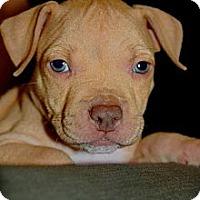 Adopt A Pet :: Bachelor - Orlando, FL