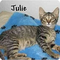 Adopt A Pet :: Julie - AUSTIN, TX