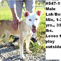 Adopt A Pet :: # 547-11 - ADOPTED! - Zanesville, OH