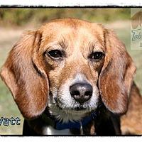 Adopt A Pet :: Wyaytt - Yardley, PA