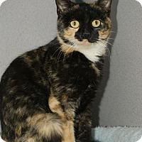 Adopt A Pet :: Chantilly - Kinston, NC