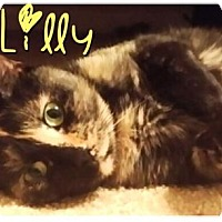 Adopt A Pet :: #15-026 Lilly - York County, PA
