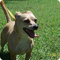 Adopt A Pet :: JACIE - Odessa, FL