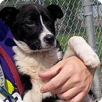 Adopt A Pet :: Charlie - Meet Him! Laid back - Norwalk, CT