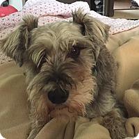 Adopt A Pet :: Chiquita - Sharonville, OH