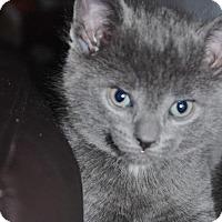 Adopt A Pet :: Briar - Caistor Centre, ON