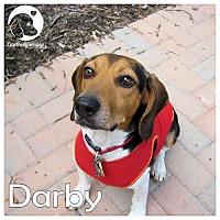 Adopt A Pet :: Darby - Novi, MI