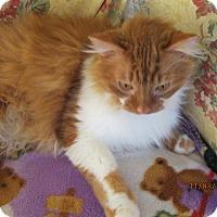 Petsmart Northborough Cat Adoption