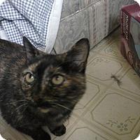 Adopt A Pet :: Momma Torte - Clarkson, KY