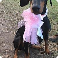 Adopt A Pet :: Anya - Houston, TX