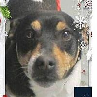 Adopt A Pet :: SAMMY Low feew Neutered - Red Bluff, CA