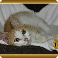 Adopt A Pet :: Levi - New Richmond,, WI
